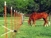 horsefencinig